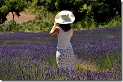 Provence 0302